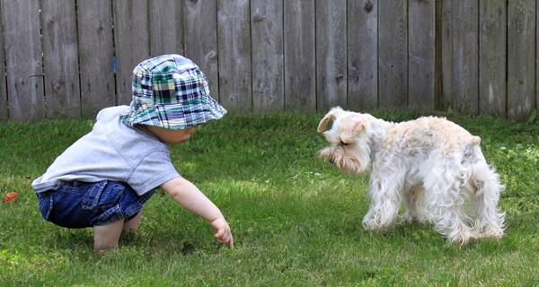 Toddler and dog on lawn